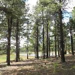  Picnic area, Dogtown Lake