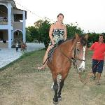 Tasos's beautiful horse