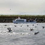 Special Tours - Puffin Express