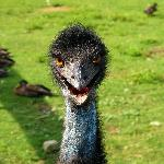 """I'm an emu, obviously!"""