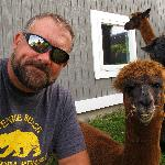  Hanging with the alpacas