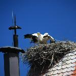 Storks on the roof of Tradicije Cigoc