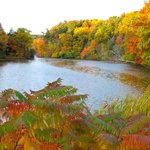 Fall Foliage by Durand Pond