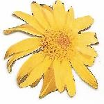  Arnica Logo