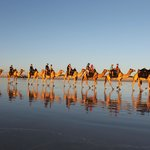 Camel Train Reflections