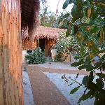 Photo of Little Palm Grove