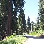  Verso il Sequoia NP