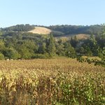 le colline che circondano il B&amp;B
