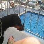 looking out at the pool