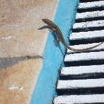 Awww, cute lizard on the side of the pool