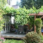 The back yard grape arbor and spa.