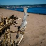 Giant piece of driftwood on the beach