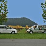 Enjoy discounted tours with hawkes Bay Scenic Tours as a Nest Haven client