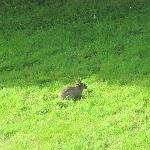  rabbit in the garden spotted from our room