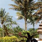 view from restaurant towards garden and lake victoria