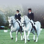 ‪The Tempel Lipizzans‬