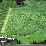 Jacob's Corn Maze