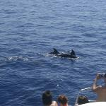 Photo of Animal Encounters Dolphin Search Encounter