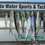 Edisto Watersports and Tackle