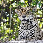 Pantanal Nature Wildlife Tours