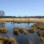 Parc Naturel des Hautes Fagnes