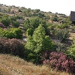 Neot Kedumim Biblical Landscape Reserve
