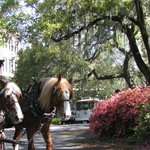 Historic Savannah By Foot