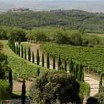 Poggio Antico Vineyards