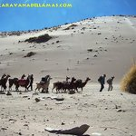 Caravana de Llamas Private Day Tours