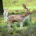 Bradgate Country Park