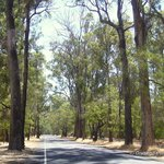 Ludlow Tuart Forest