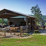 Chattahoochee Stables
