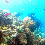 Arrows Dive Centre Bali