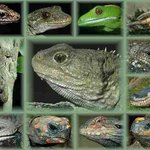 Reptile Park