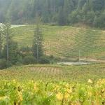 Photo of Porter-Bass Vineyard and Winery