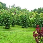 Kuaiwi Farm