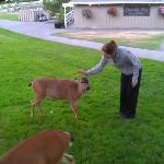If you have apples, the deer are your best friend