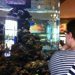 tropical fish tank in center of restaurant