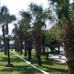 Palms by picnic area