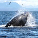 Hebridean Whale Cruises