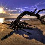  Driftwood Beach
