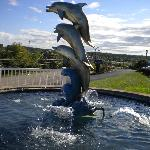 dolphin water fountain