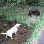 forest stream for little paddlers, dam builders & dogs