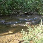  Creek for playing and fishing (several feet lower than tent area, you won&#39;t get flooded).