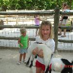 Emily and the Goats