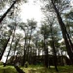 Photo de The Forest Lodge at Camp John Hay