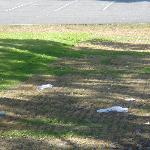  Litter on the grounds outside