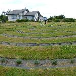 Revamped Labyrinth with newly planted baby lavender