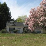  Birdsong Bed and Breakfast with our magnolia tree in full bloom