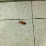 cockroach in shower